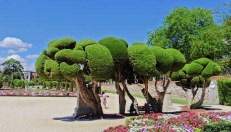 Madrid Park (crazy trees)