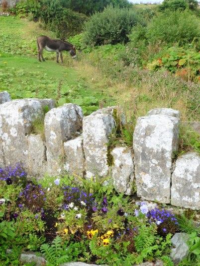 Donkey of Doolin