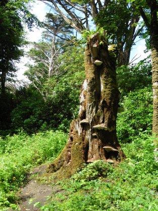 Connemara Gardens